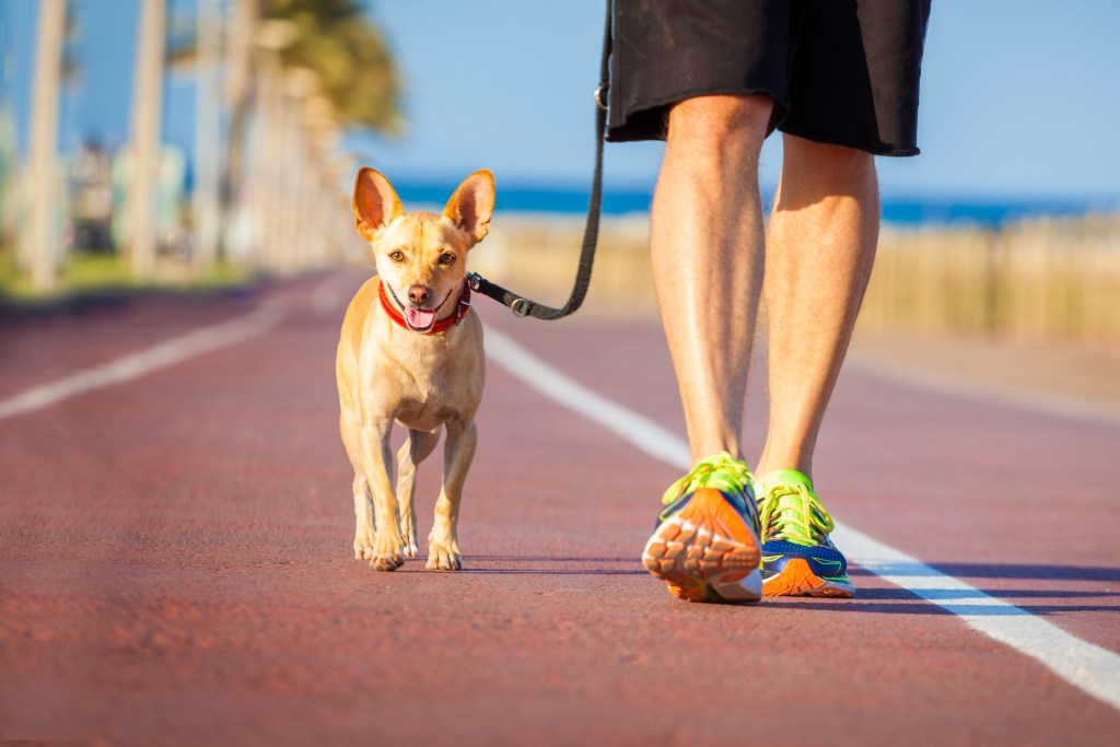 Dog And Owner Walking app development